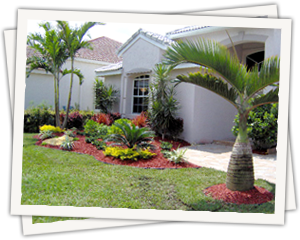 landscape design construction in south florida optimum landscaping